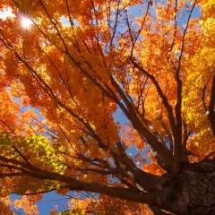 Ešvil u jesen