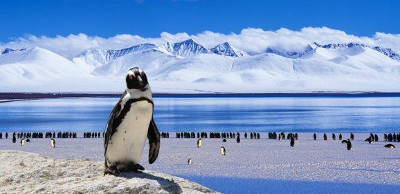 Antarktik, ledena avantura