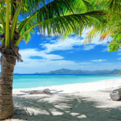 Jamajka: Ya Moooon!