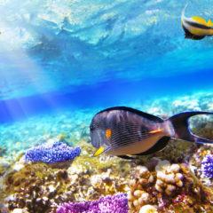 Šarm el Šeik, raj na zemlji i pod vodom