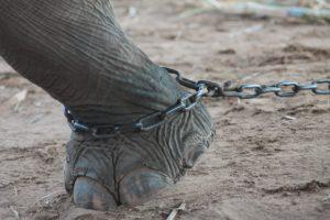 Slonovi: Mračna strana azijskog turizma