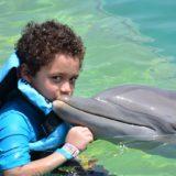 Plivanje sa kitovima i delfinima – opasna atrakcija
