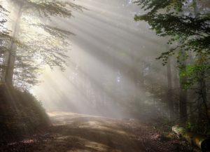 Aokigahara – japanska šuma samoubistava
