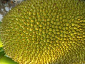 Avion ostao prizemljen zbog nesnosnog mirisa durijana