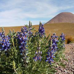 Atakama – pustinja u kojoj nikada nije dosadno