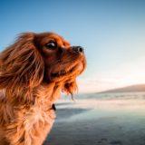 Putovanje sa psom: radost ili gnjavaža?