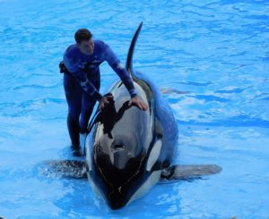 PETA brani prava životinja u travel industriji