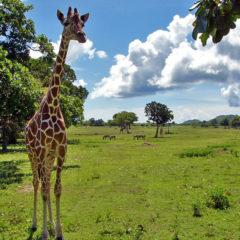 Afrički safari: Zalazak sunca u savani