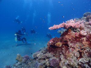 U Jadranu otkriven prvi koralni greben