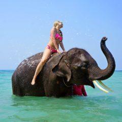 Etika putovanja: Da li je u redu jahati slona?