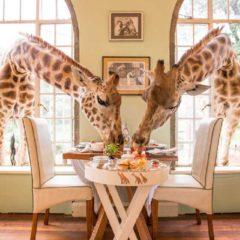 Doručak sa žirafom