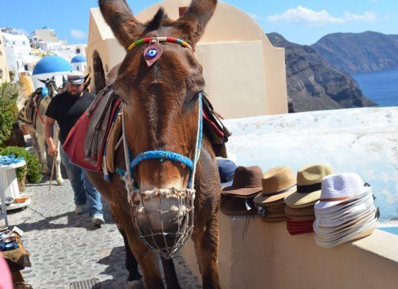 Nemojte jahati magarce na Santoriniju