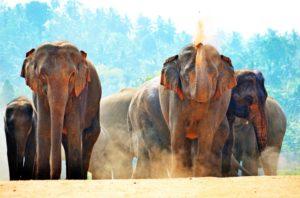 Divlje životinje Šri Lanke mame turiste