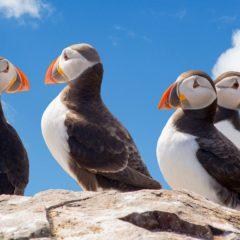 Udaljena ostrva kriju čudesne životinje