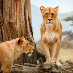 Lovni turizam i etika: Da li ste za ili protiv?