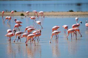 Gde sve možete videti flamingose
