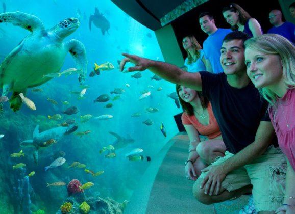 Tematski park SeaWorld na Floridi