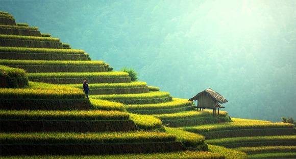 Obilazak pirinčanih polja u unutrašnjem delu ostrva samo je jedan od brojnih izleta na Baliju