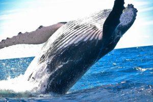 5 mesta za neverovatne doživljaje sa životinjama