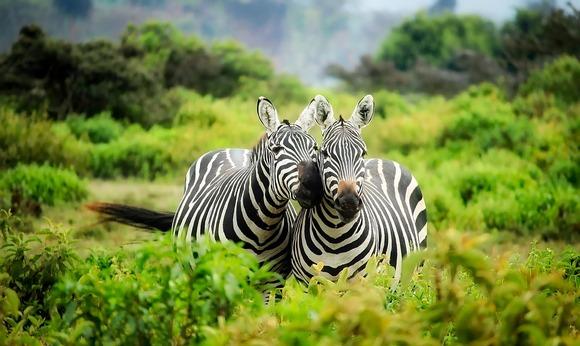 Osluškujte razne zvuke, osečajte mirise i posmatrajte ponašanje tih životinja, jer ćete sve to propustiti ako samo ostanete iza objektiva