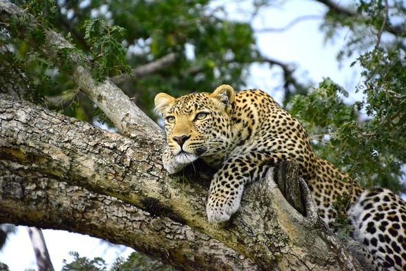 Safari u vozilima će vam omogućiti da priđete bliže sisarima i grabljivcima. Međutim, istraživanje divljih pejzaža Kenije dolazi do izražaja tek kada krenete da pešačite