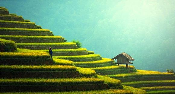 Pirinač je osnovni proizvod koji uzgajaju na Baliju i značajan deo lokalne kulture