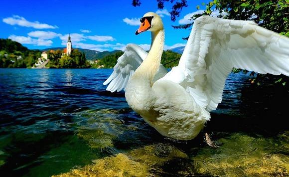 u Sloveniji ne bi trebalo propustiti posetu Bledu, a u Hrvatskoj Nacionalnom parku Plitvice