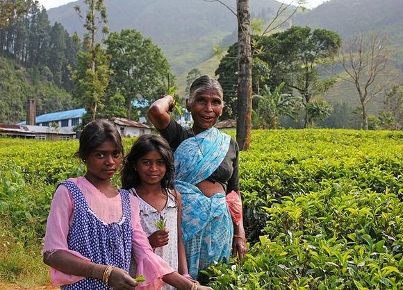 Kao što su to činile generacije njihovih pretkinja, vešte ostrvljanke ručno beru listove zelenog čaja i stavljaju ih u košare na svojim leđima