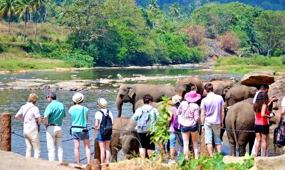 Iako je Pinavela samo dobra imitacija prirodnog okruženja ili njegova najpribližnija varijanta, slonovi svih uzrasta u njemu izgledaju zadovoljno i zdravo