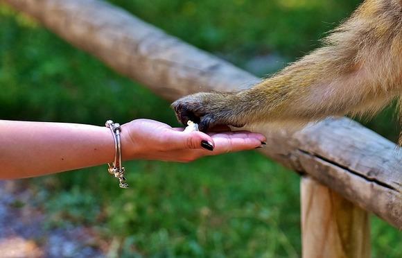 ABTA je neprihvatljivim proglasila i turistički kontakt i hranjenje velikih majmuna, medveda, krokodila i aligatora, orki i lenjivaca, kao i kontakt, hranjenje i šetnju sa divljim mačkama