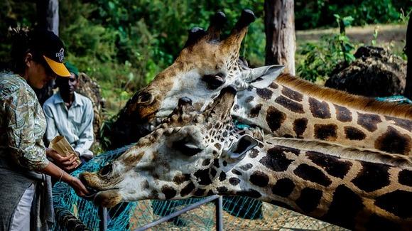 Iz Svetske organizacije za zaštitu životinja izrazili su zadovoljstvo zbog usvojenog novog pravilnika, koji na jasan način obrazlaže iz kog razloga je neprihvatljivo korišćenje slonova za zabavu turista, kao i pravljenje selfija sa lenjivcima u Amazoniji, hranjenje orangutana ili žirafa i šetnja sa lavovima u južnoj Africi
