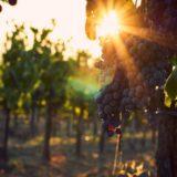 Posetite manje poznate vinske gradove Italije