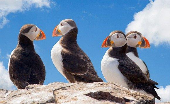 jedreći oko izolovanih zapadnih fjordova srešćetetuljane, morske ptice i arktičke lisice