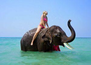 Jahanje slonova na odmoru je neprihvatljivo!