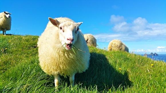 U septembru možete učestvovati u Retiru, jednoj je odnajstarijihkulturnih tradicija u zemlji. U pitanju je godišnji skupuzgajivača ovaca kome prisustvujuporodice i prijatelji ovčara, kao i mnogobrojni turisti