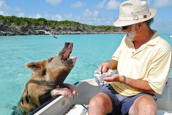 Arhipelag od 700 ostrva čine Bahame, koji mame milione turista svake godine