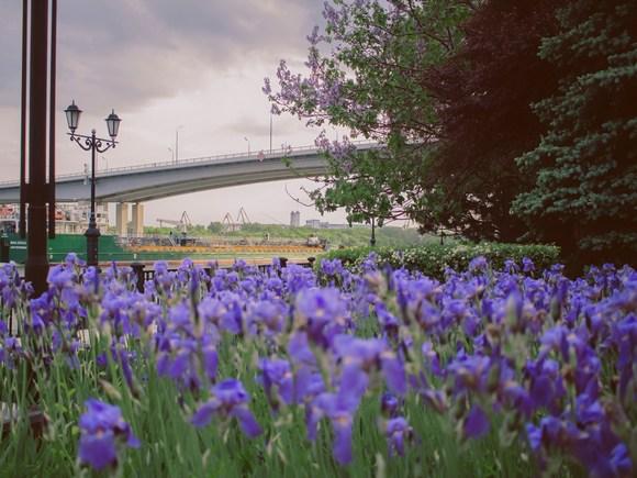 Grad zelenila kraj vrata mora, tako zovu Rostov na Donu