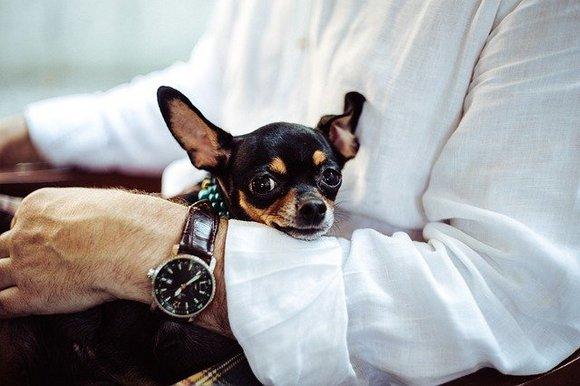 U  SAD-u, gde su psi vodiči i životinje koje služe kao emotivna podrška na letovima veoma česta pojava, na aerodromima postoji i veći broj toaleta za životinje
