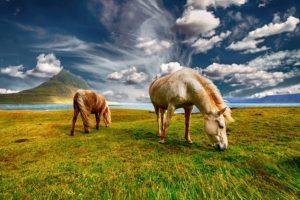 Island – vodič za sva godišnja doba