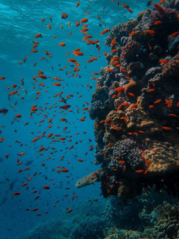 Koralni greben nestaje