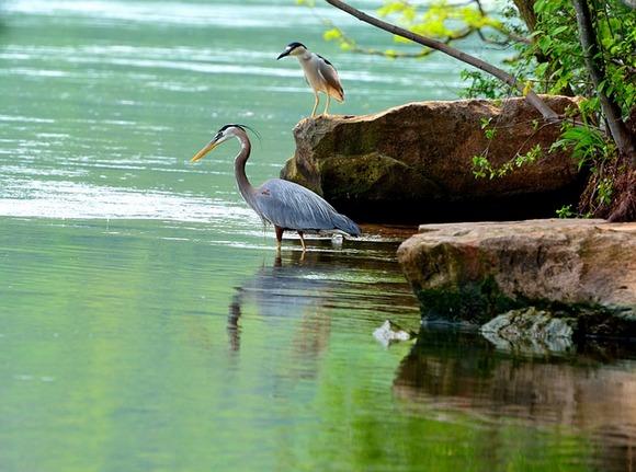 Oko Nijagarinih vodopada žive brojne vrste ptica i životinja