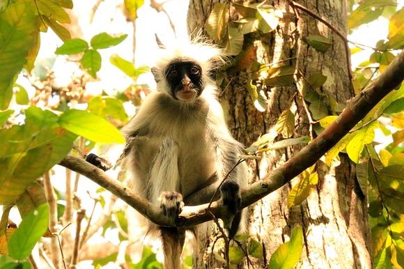 Bogata folra i fauna Zanzibara