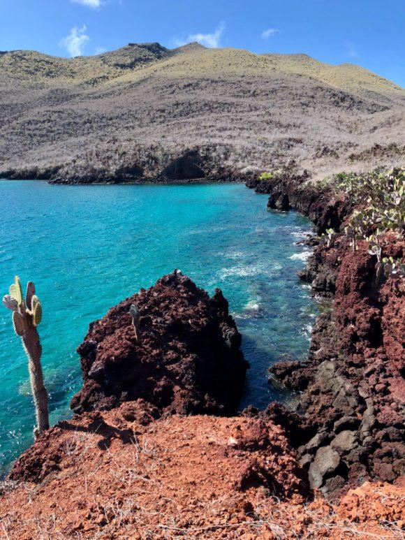 Galapagos nestaje